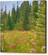 Flowers In A Mountain Glade Acrylic Print