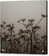 Flowers In California Fog Acrylic Print