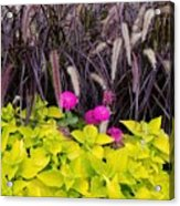 Flowers In Contrast Acrylic Print