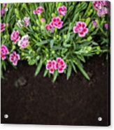 Flowers In Grass Growing From Natural Clean Soil Acrylic Print
