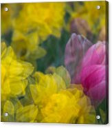 Flowers In Motion Acrylic Print