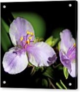 Flowers In Natural Light Acrylic Print