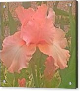 Flowers In Pink Acrylic Print