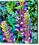 Flowers In Seville. Spain.  Acrylic Print