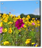 Flowers In The Field Acrylic Print