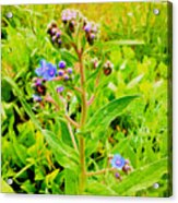 Flowers In The Garden Of Life Acrylic Print