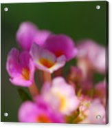 Flowers In The Shade Acrylic Print