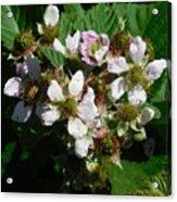 Flowers Of Berries Acrylic Print
