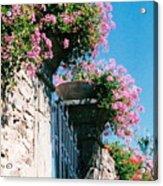 Flowers Of Panzano Photograph Acrylic Print