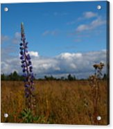 Flowers Of Leaving Summer Acrylic Print