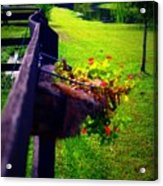 Flowers On A Fence Acrylic Print