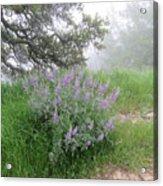 Flowers On A Foggy Day Acrylic Print