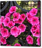 Flowers On Iron Grate In Venice Acrylic Print