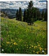 Flowers On The Hillside Acrylic Print