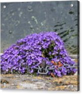 Flowers On The Stone Wall Acrylic Print
