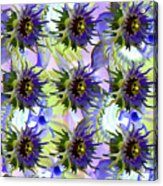 Flowers On The Wall Acrylic Print by Betsy Knapp