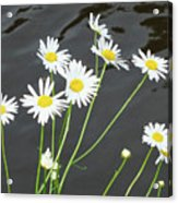 Flowers On The Water Acrylic Print