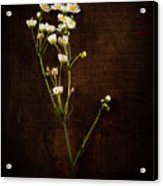 Flowers On Wood Acrylic Print