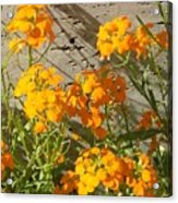 Flowers Orange 2 Acrylic Print by Warren Thompson