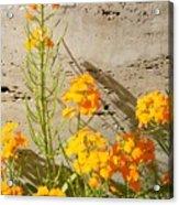 Flowers Orange Acrylic Print by Warren Thompson