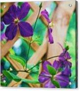 Flowers Purple Acrylic Print