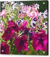Flowers Really Do Smile Acrylic Print