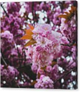 Leeds Pink Flower Acrylic Print
