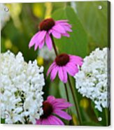 Flowers That Contrast Acrylic Print