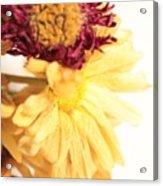 Flowers Acrylic Print by Thomas Leon