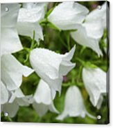 Flowers With Droplets 1 Acrylic Print
