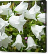 Flowers With Droplets 2 Acrylic Print