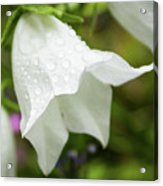 Flowers With Droplets 3 Acrylic Print