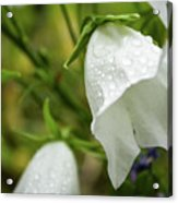Flowers With Droplets 4 Acrylic Print