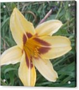 Flowers2 Acrylic Print