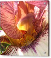 Flowerscape Pink Iris One Acrylic Print