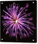 Flowerworks #36 Acrylic Print