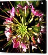Flowerworks Acrylic Print
