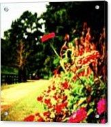 Flowery Path Acrylic Print