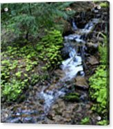 Flowing Creek Acrylic Print