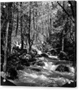 Flowing Creek Acrylic Print
