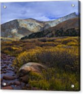 Flowing From Bierstadt Acrylic Print by Barbara Schultheis