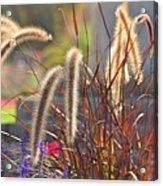 Fluffy Herbs Acrylic Print