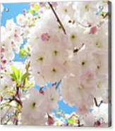 Fluffy White Pink Sunlit Tree Blossom Art Print Canvas Baslee Troutman Acrylic Print