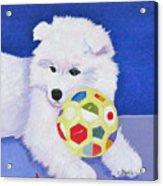 Fluffy's Portrait Acrylic Print
