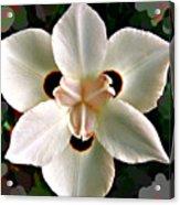 Fluid Flower Acrylic Print