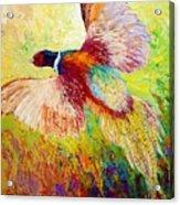 Flushed - Pheasant Acrylic Print