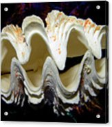 Fluted Giant Clam Shell Acrylic Print