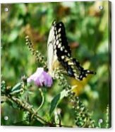 Flutter By 102110 Acrylic Print