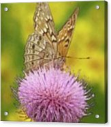 Flutterby Acrylic Print