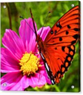 Fritillary Flutterby Acrylic Print